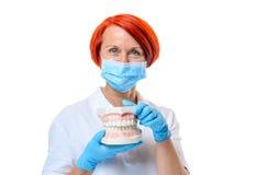 Il dentista femminile con capelli rossi dimostra i denti Immagine Stock Libera da Diritti