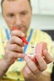 Il dentista tiene la mascella e le prove esso che per mezzo dello strumento fotografie stock libere da diritti