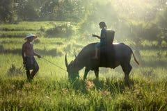 Il derivato ed il papà questo è stile di vita dell'agricoltore della famiglia Immagine Stock Libera da Diritti