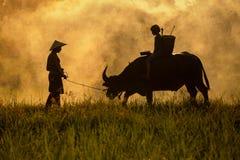 Il derivato ed il papà questo è stile di vita dell'agricoltore della famiglia Fotografia Stock