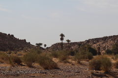 Il deserto fotografie stock