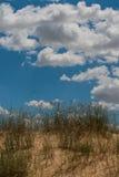 Il deserto con le erbe selvagge Fotografia Stock Libera da Diritti