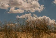 Il deserto con le erbe selvagge Immagine Stock Libera da Diritti