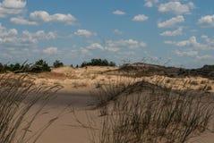 Il deserto con le erbe selvagge Fotografie Stock Libere da Diritti