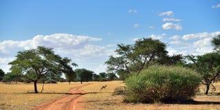 Il deserto del Kalahari, Namibia fotografia stock