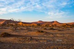 Il deserto di Namib delle dune di sabbia, sala il piano, il roadtrip nel parco nazionale meraviglioso di Namib Naukluft, destinaz Fotografia Stock