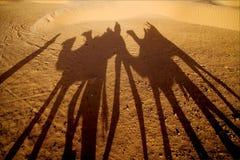 Il deserto di Sahara Immagini Stock