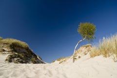 Il deserto Leba Fotografia Stock