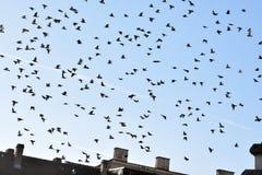Il dettaglio del cielo con i piccioni Fotografie Stock