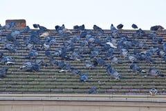 Il dettaglio del tetto della costruzione con molti piccioni Fotografia Stock