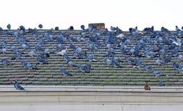 Il dettaglio del tetto della costruzione con molti piccioni Immagine Stock