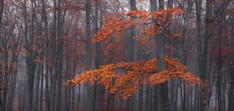 Il dettaglio dell'albero e del rosso lascia in foresta nebbiosa durante l'autunno Immagine Stock Libera da Diritti