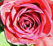 Il dettaglio della rosa del magenta ha strutturato l'arte floreale di stile di impressionismo Immagine Stock