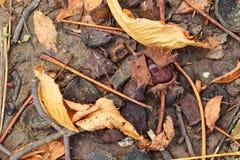 Il dettaglio della stagione di caduta con le foglie cadute Immagini Stock Libere da Diritti