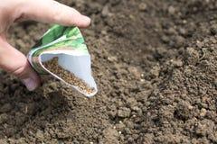 Il dettaglio sui semi degli spinaci in una borsa quando semina il seme allinea su Veget Fotografie Stock