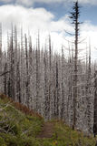 """Il †di incendio violento """"ha bruciato gli alberi in foresta in U.S.A. Immagini Stock"""
