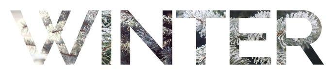 Il ` di inverno del ` di parola Le lettere dei rami attillati nella neve e nel gelo immagini stock libere da diritti