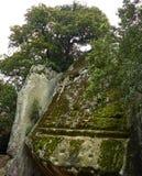 Il ` di Pedra del Sacrifici del ` nella foresta di Savassona, stante alta in mezzo al campo Fotografia Stock Libera da Diritti