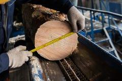 il diametro dell'albero di misura immagini stock libere da diritti