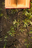 Il diario aperto del libro della libro con copertina rigida, pagine smazzate sulla natura vaga atterra Fotografia Stock Libera da Diritti