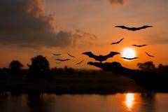 Il diavolo della mano libera il pipistrello con le siluette e l'acqua riflette prima del tramonto nel fondo di concetto del giorn Fotografia Stock Libera da Diritti
