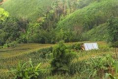 Il disboscamento per coltivazione di agricoltura sulla montagna Fotografie Stock Libere da Diritti