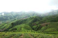 Il disboscamento per coltivazione di agricoltura sulla montagna Fotografia Stock