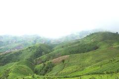 Il disboscamento per coltivazione di agricoltura sulla montagna Immagine Stock Libera da Diritti