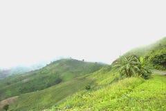 Il disboscamento per coltivazione di agricoltura sulla montagna Immagini Stock