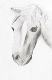 Il disegno del bambino - testa di cavallo Immagini Stock Libere da Diritti