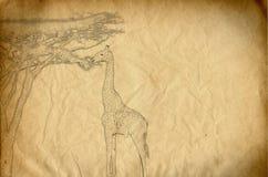 Il disegno di una giraffa che mangia spruce va Immagine Stock Libera da Diritti
