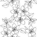 Il disegno passa un ramo del fiore di ciliegia, pera, mela Modello senza cuciture di vettore dei fiori della molla Contesto decor royalty illustrazione gratis