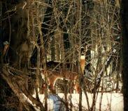 Il disgelo della primavera Immagini Stock