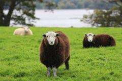Il distretto del lago in Inghilterra Fotografie Stock