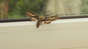 Il dito tocca l'ala di un insetto video d archivio