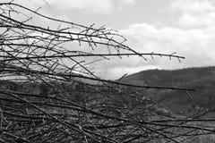 Il dolore degli alberi fotografia stock libera da diritti