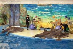 Il Dolphinarium Fotografie Stock Libere da Diritti