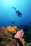 Il Dominica variopinto fotografia stock