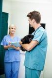 Il dottore veterinario With A Dog Looking alla femmina fotografia stock libera da diritti