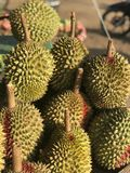 Il durian fotografie stock