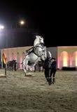 Il Equestrian effettua il 26 marzo 2012 in Bahrain fotografia stock