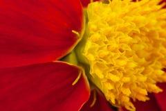 Il est rouge un fond jaune images libres de droits