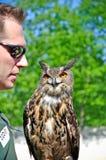 Il falconiere cattura un gufo sul suo guantone di protezione Immagine Stock Libera da Diritti