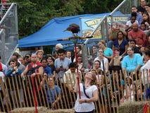 Il falconiere medievale 6 di festival 2016 Fotografia Stock