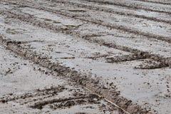 Il fango del suolo nel giacimento del riso prepara per il riso della pianta nell'agricoltura Fotografie Stock