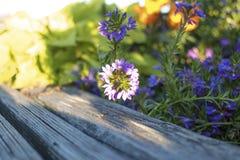 Il fascino dei fiori, la bellezza Fotografia Stock
