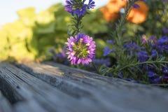 Il fascino dei fiori, la bellezza Fotografie Stock