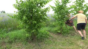 Il fermo del ragazzo di paese ha sorriso ragazza che va in giro l'albero in giardino 4K archivi video