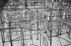 Il fermo della trappola del pesce di canestro compensa la deriva, pesci delle aragoste sull'oceano, fuoco selettivo a midground Immagini Stock Libere da Diritti