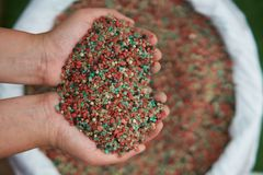 Il fertilizzante in agricoltore consegna la borsa del fertilizzante Fotografia Stock Libera da Diritti